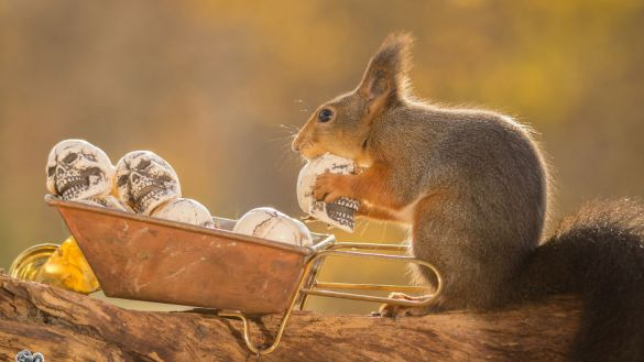 i-shoot-squirrels-in-my-backyard-and-i-can-almost-make-a-living-from-what-i-love-6__880