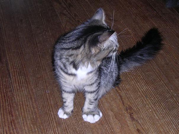 04-ちょっとお遊びが過ぎたニャ・・・蜂に刺されてしまったネコたち