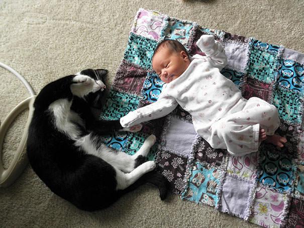 18-ほっこり20枚! 赤ちゃんとネコの仲良しな風景