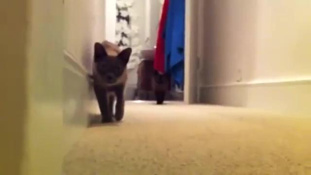 02-後半に注目! 油断してると怖い(笑) ネコとダルマさんが転んだで遊んでると・・・