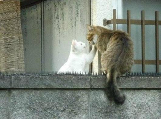 04-とげの山を越えてネコが向かったのは?-とってもほんわかな物語がありました!