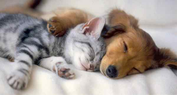 adorable-different-animals-love3