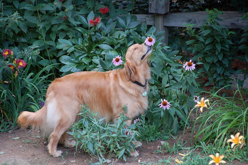 animals-smelling-flowers-371__880