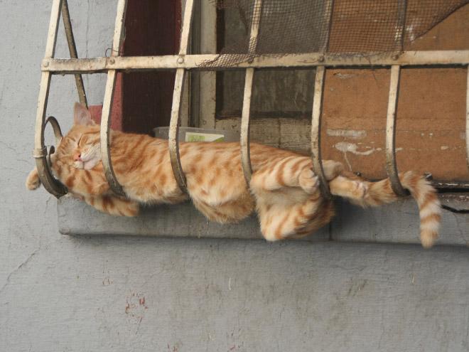 comfy-ginger