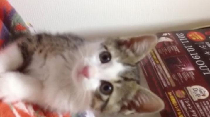 02何を見つけたの!?-とっても可愛い子ネコさん。じ〜っと見つめる姿にキュン♥