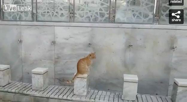 03-メッカで見かけた優しい光景。水場で水を飲みたそうにしているネコに水を飲ませる心優しい男性