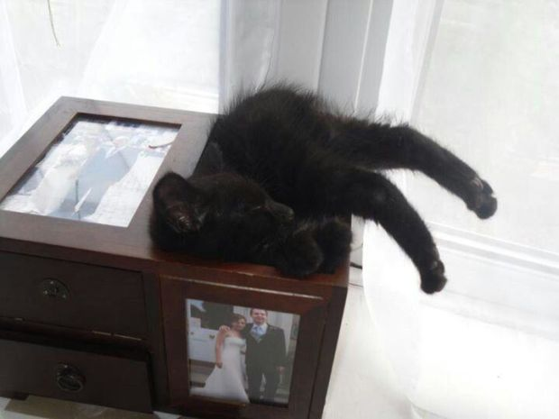 awkward-cat-sleeping-positions13