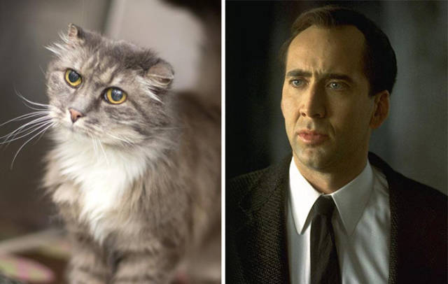 celebs_and_their_strikingly_similar_animal_doppelgangers_640_14