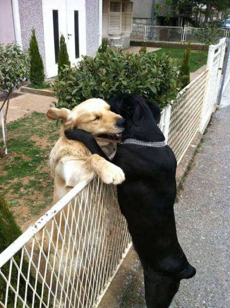 doggies_who_are_friends_are_too_cute_not_to_smile_640_16