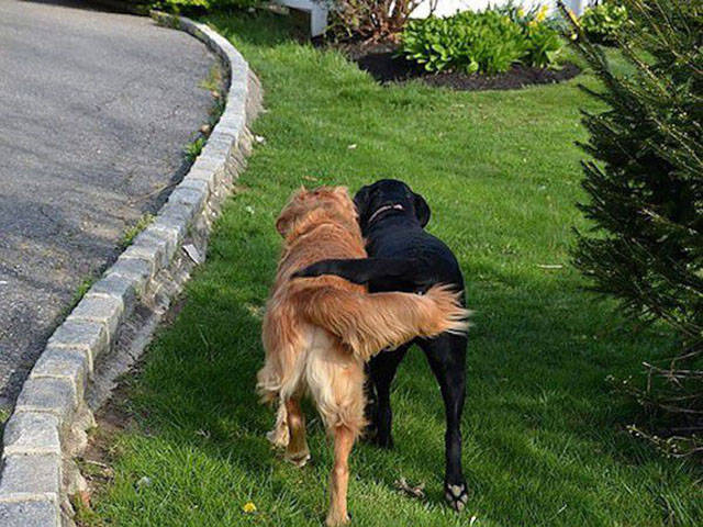 doggies_who_are_friends_are_too_cute_not_to_smile_640_17