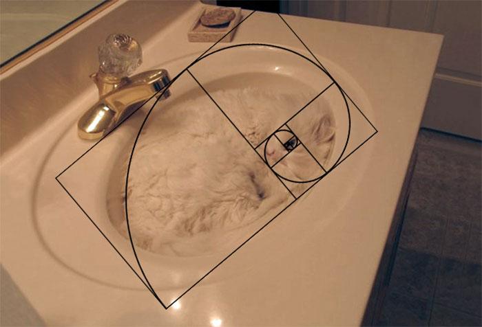 fibonacci-composition-cats-furbonacci-url-5__700