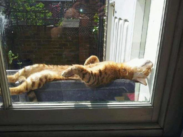 cats-enjoying-warmth-1131__605