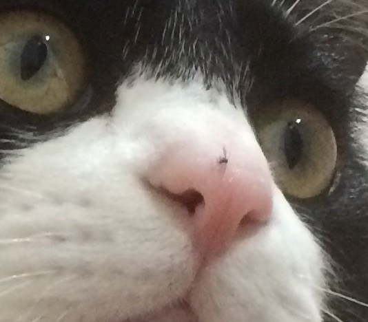 鼻に羽虫がついた
