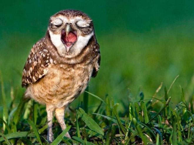 yawn1