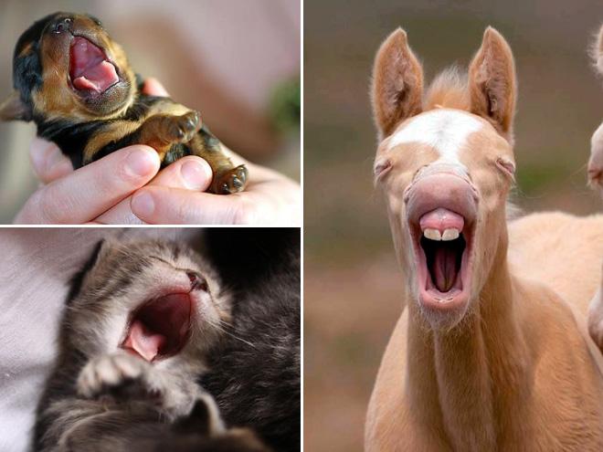 yawn6