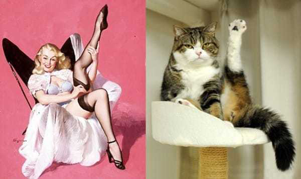 Cats-Vs-Pinup-Models-02