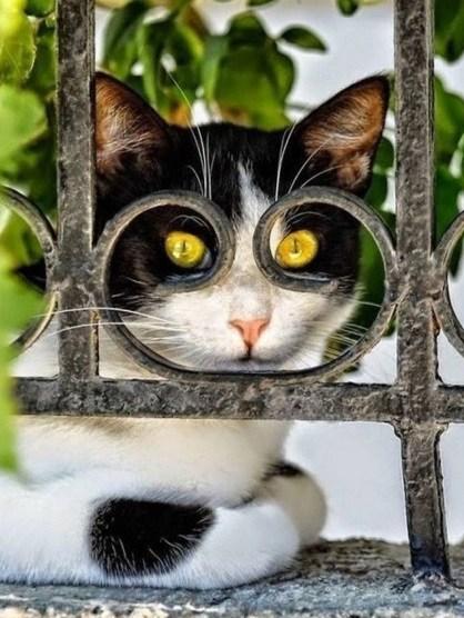 タイミングバッチリで撮影出来たネコさんの奇跡の写真10選-6
