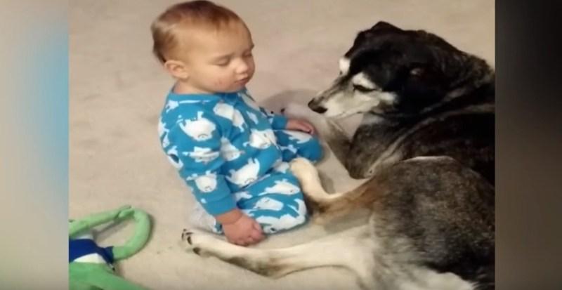 Sleepy Baby Cuddles with Dog   YouTube