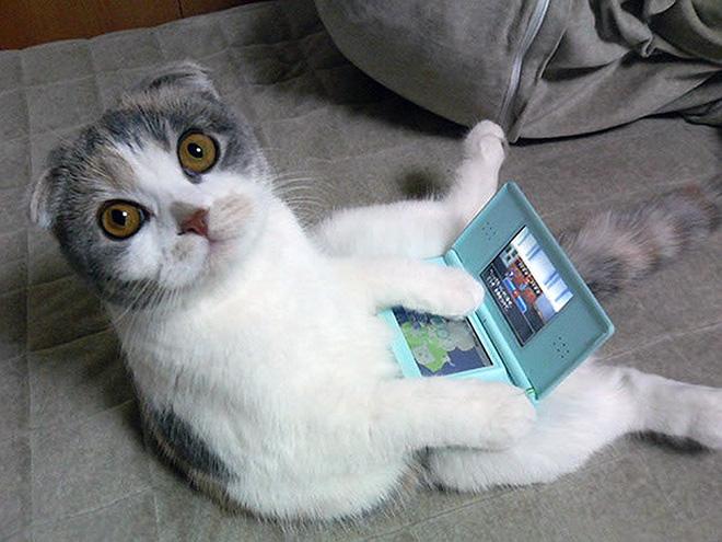 sitting-cats3