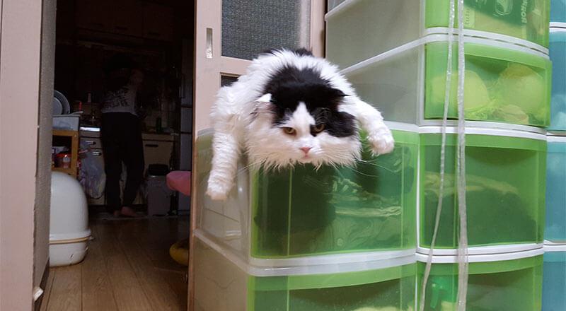 降りれない。「トノちゃん」