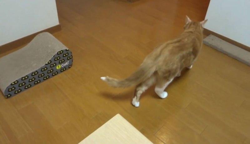 01「あちゃ~」じぶんのお尻をかいだネコさんの渋い表情に注目!
