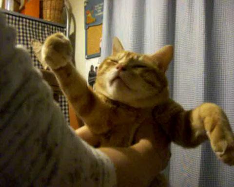 04肉球をグッパグッパするネコさんのスローな仕草が微笑ましい