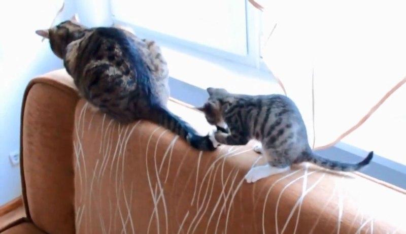 03両者一歩も譲らない!しっぽで遊びたい子ネコさんといい加減ゆっくりさせてほしいネコさんとの攻防戦がおもしろすぎる(笑)