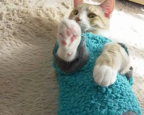 01「とろ~ん♪」肉球マッサージに浸るネコさんがあまりの気持ちよさにうっとりしてる♥
