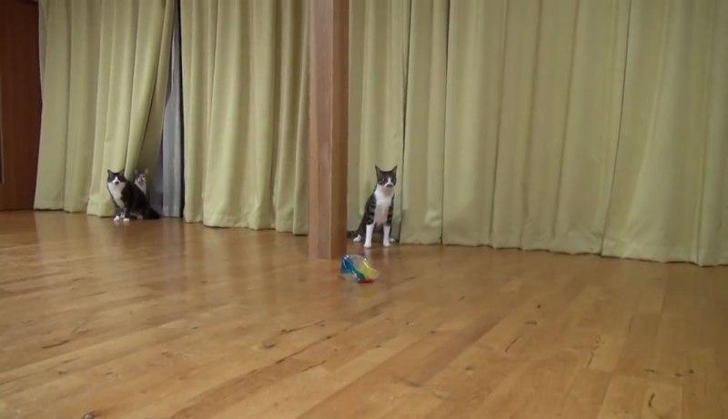 03たいへんだぁー(゜□゜)Σ!!雷にびっくりしたネコさんが驚くべき瞬発力で逃げていく!!