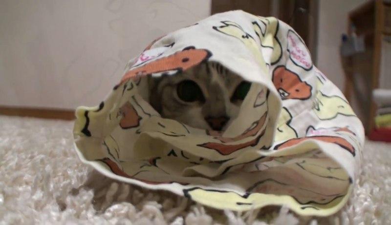 02「で、でてくれない(汗)」パジャマのズボンからネコをだす方法に思わず納得♪