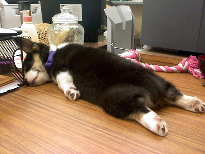 funny-sleeping-dogs16