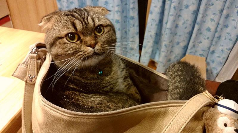 ママと一緒にお仕事行くニャー!私の通勤カバンの中です