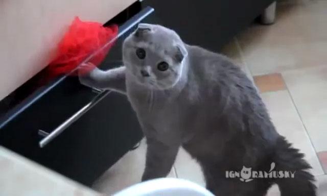 04我が家でネコさんがイタズラをしているところを目撃!飼い主さんにばれた時のシュールすぎるリアクションとは・・・??