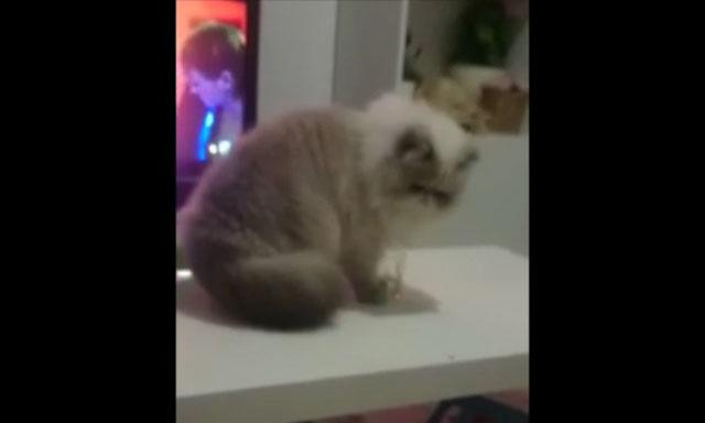 01飼い主さんの「やめて」の声に一旦手を止めたにもかかわらず犯行に及んだネコさんに衝撃が走る!