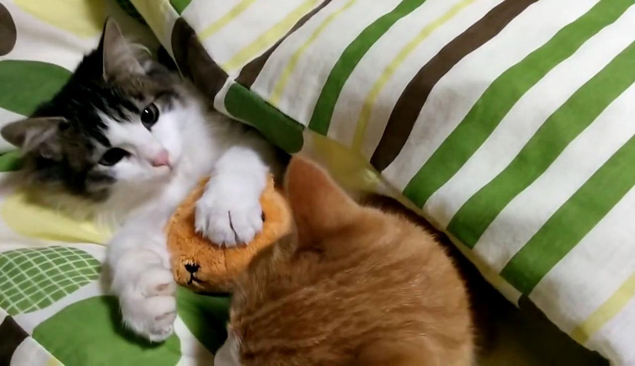 01「ねぇ~遊ぼうよ~」本気で眠たいネコさんにちょっかいを出す遊び足りない子ネコさんにときめきを感じる!