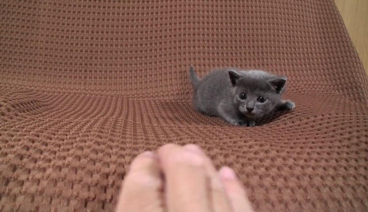 05つぶらな瞳があまりにもかわいい♪寄って来ては離れる子ネコさんに見れば見るほど惹き込まれる!