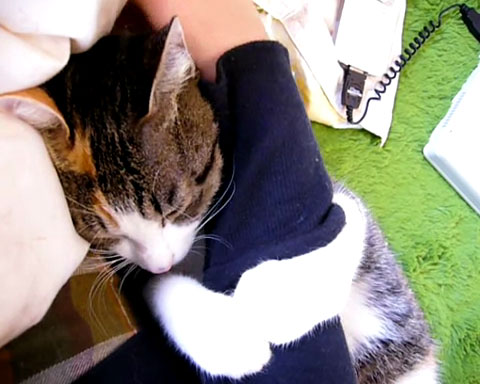 03「絶対に離さないにゃ♪」こんな風にされてみたい!飼い主さんの腕に抱きつくネコさん