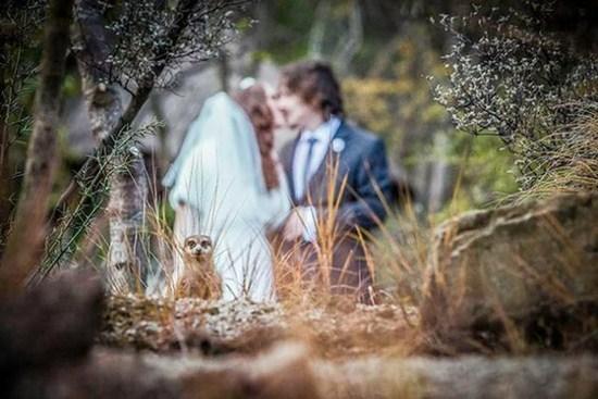 wedding-photobomb23