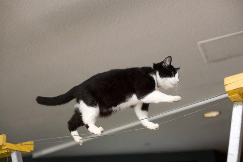 ネコさんのとっても凄いバランス感覚が分かる写真10選+2枚010