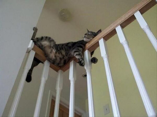 ネコさんのとっても凄いバランス感覚が分かる写真10選+2枚09