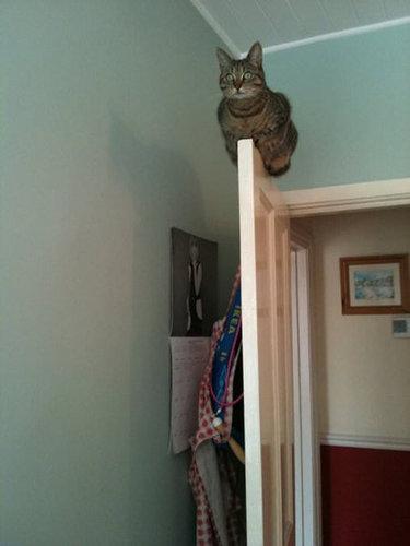 ネコさんのとっても凄いバランス感覚が分かる写真10選+2枚07