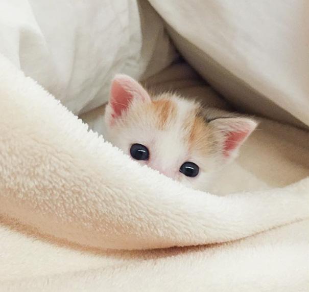 cute-kittens-23-57b30ac58ea4a__605