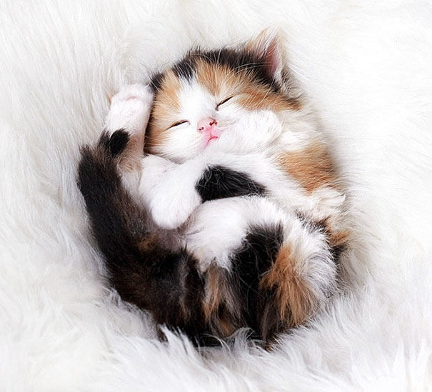cute-kittens-4-57b30a939dff5__605