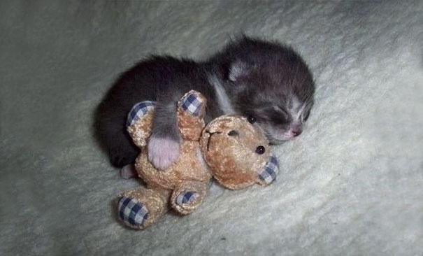 cute-kittens-63-57b326d0e181d__605