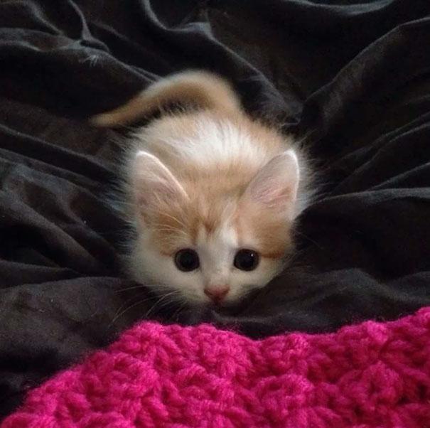 cute-kittens-9-57b30aa5797eb__605