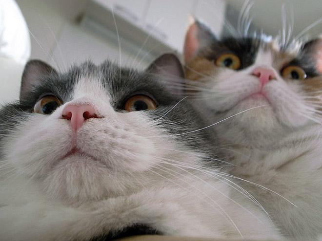 selfies8