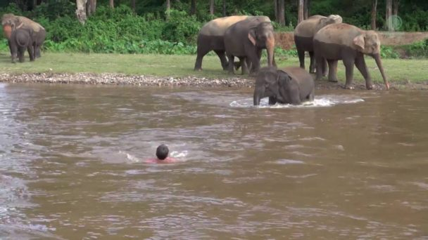 see-the-amazing-moment-an-elepha-608x342