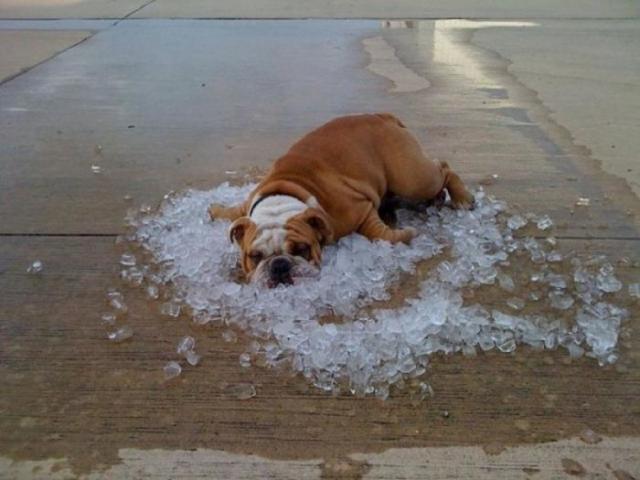 「暑いの苦手」の画像検索結果