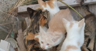 野良猫を見かけたときに命の危険があるために絶対にやってはいけないこと