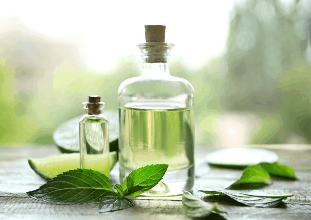 Does Peppermint Oil Keep You Cool?